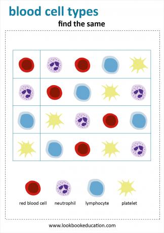 Worksheet Find the Same Blood Cells